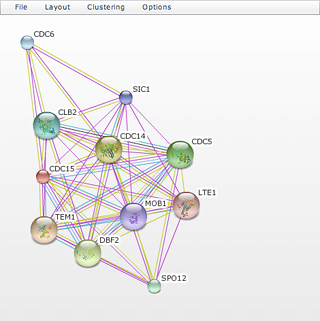 STRING 8.1 network viewer